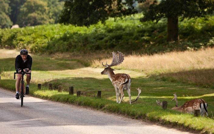 A cyclist in Richmond Park passes a deer - Buzz Pictures / Alamy Stock Photo