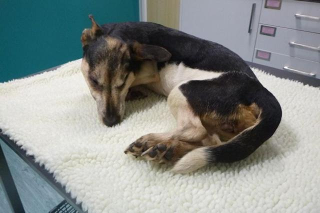 Vets believe she was left at the location overnight as she displayed signs of hypothermia (RSPCA)