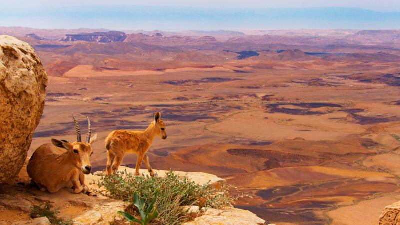 Planet Earth II travels around the globe—this time with a more urgent environmental message   BBC America