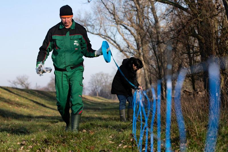 German forest workers set up an electric wildlife fence on the border between eastern Germany and western Poland to prevent wild boars spreading African swine fever.