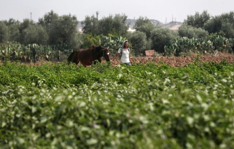 Israel says it only sprayed the land on its side of the border with Gaza to clear the area and prevent the growth of any hiding places for potential Palestinian attackers (AFP Photo/MAHMUD HAMS)