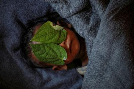 Betel leaves cover the face of 11-month-old Rohingya refugee Abdul Aziz whose wrapped body lay in his family shelter after he died battling high fever and severe cough at the Balukhali refugee camp near Cox's Bazar, Bangladesh, December 4, 2017. REUTERS/Damir Sagolj