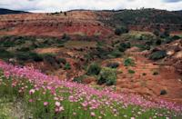 <p>Wildflowers in Oaxaca, Mexico // February 23, 2015</p>