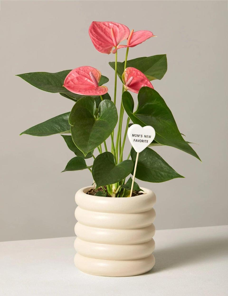 """<p>We absolutely love the gorgeous blush color of the <a href=""""https://www.popsugar.com/buy/Flowering-Pink-Anthurium-569144?p_name=Flowering%20Pink%20Anthurium&retailer=thesill.com&pid=569144&price=65&evar1=casa%3Aus&evar9=46127505&evar98=https%3A%2F%2Fwww.popsugar.com%2Fhome%2Fphoto-gallery%2F46127505%2Fimage%2F46129845%2FFlowering-Pink-Anthurium&list1=shopping%2Cgift%20guide%2Cflowers%2Chouse%20plants%2Cplants%2Cmothers%20day%2Cgifts%20for%20women&prop13=api&pdata=1"""" class=""""link rapid-noclick-resp"""" rel=""""nofollow noopener"""" target=""""_blank"""" data-ylk=""""slk:Flowering Pink Anthurium"""">Flowering Pink Anthurium</a> ($65). Since each bloom can last up to eight weeks, this really is the gift that keeps on giving!</p>"""