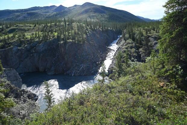 Ivvavik National Park is included in the Yukon North Slope region. A wildlife conservation and management plan is in the works for the region. (Mackenzie Scott/CBC - image credit)