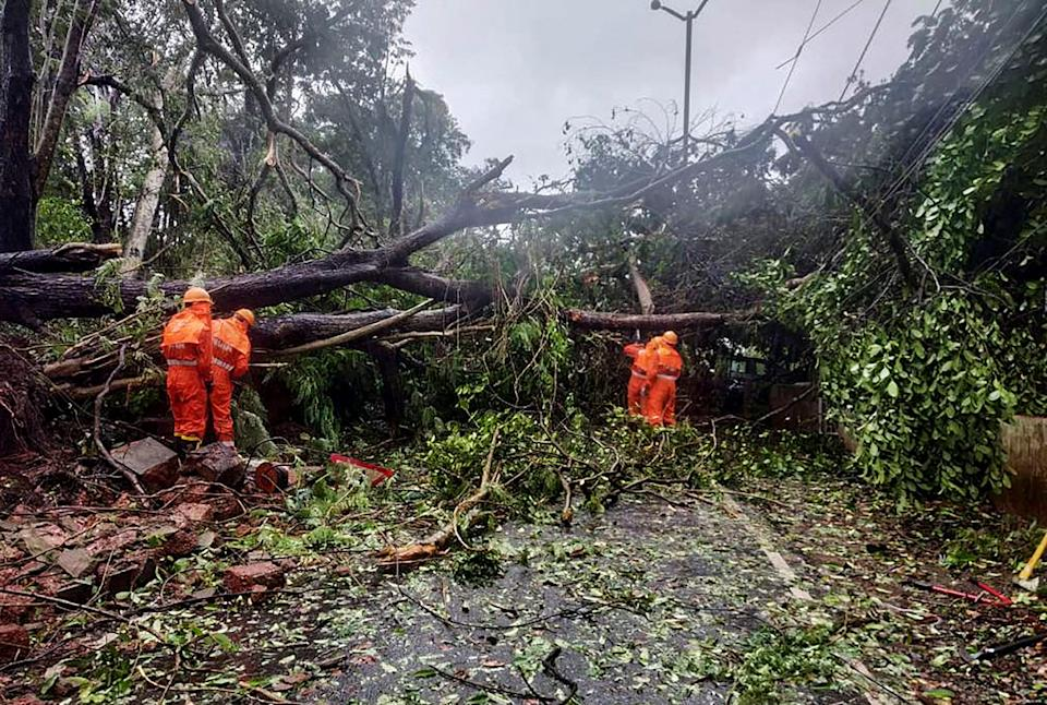 Goa: NDRF team clears a road blocked by the falling of trees due to strong winds during the formation of cyclone Tauktae, near TB hospital in Panaji