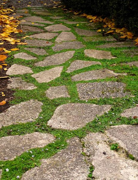In this June 12, 2013 photo, several flats of potted, walk-on plants are laid out alongside the flagstones of a pathway in Langley, Wash. The plants are divided into several pieces before being placed in the ground, where they grow quickly into a single, weed-choking mat that adds color and contrast to the stones. (AP Photo/Dean Fosdick)