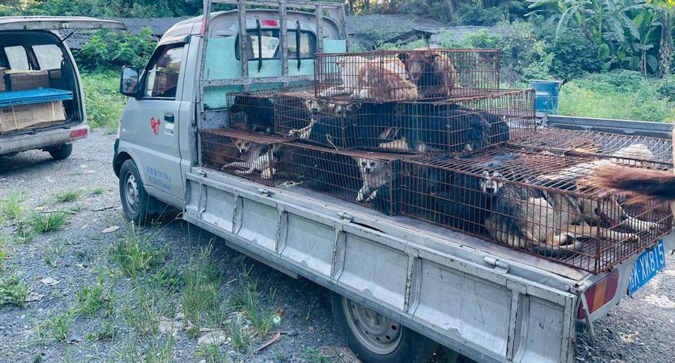 Piles of cages containing dozens of dogs sit on the back of a pick up truck. Source: Supplied/Humane Society