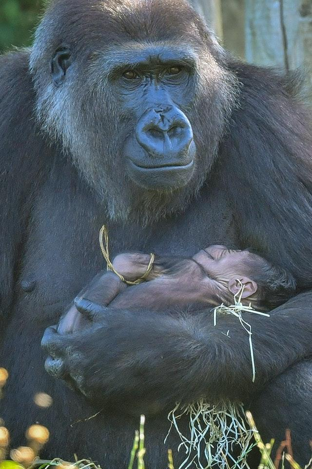 Kala lost her first baby last year after undergoing an emergency caesarean and gave birth naturally this time (Ben Birchall/PA).