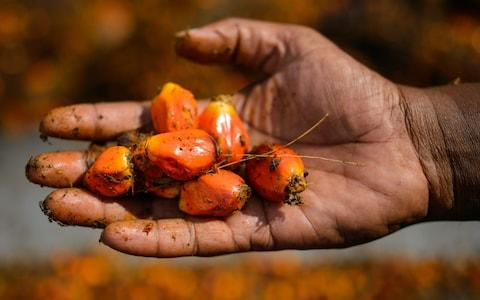 Oil from the palm fruit in used in a vast array of household groceries, including shampoo, soap, bread and biscuits - Credit: MOHD RASFAN/AFP/Getty Images