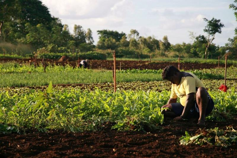 Mauritius has transformed itself from an agriculturally-based economy to a middle-income financial hub.