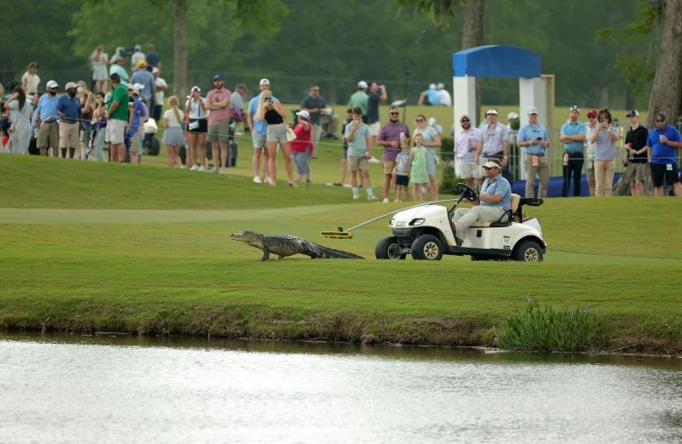 An alligator is shepherded off the 17th hole in the third round of the US PGA Tour Zurich Classic of New Orleans
