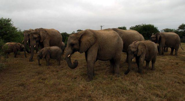 The UK Government is training an elite force of anti-poachers in African countries (PA)