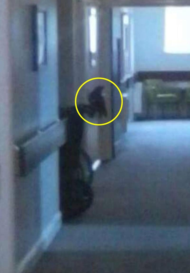 She also later spotted the figure of a raven or crow. Photo: Caters News