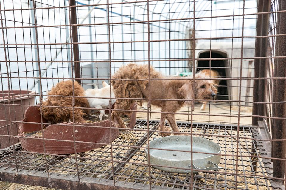 Two dogs inside a cage in Hongseong.