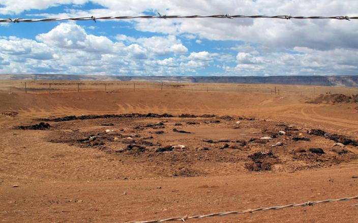 Some 191 dead horses have been found around a stock pond on Navajo land in Arizona - AP