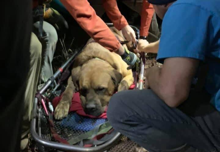Along with being exhausted, Floyd suffered cuts on his paws during Sunday's excursion. (Photo: Shawn Kenney/Salt Lake County Sheriff's Search and Rescue)