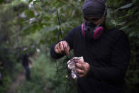 A researcher for Brazil's state-run Fiocruz Institute sets up a net for ensnaring bats in the Atlantic Forest at Pedra Branca state park, near Rio de Janeiro, Tuesday, Nov. 17, 2020. Scientists are probing the mysteries of bat immune systems and investigating strategies to minimize contact between humans and domestic animals with bats and other wild animals. (AP Photo/Silvia Izquierdo)