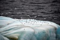 Environmental groups have slammed the race for hydrocarbons and the increased presence of nuclear reactors in the already fragile Arctic (AFP/Ekaterina ANISIMOVA)