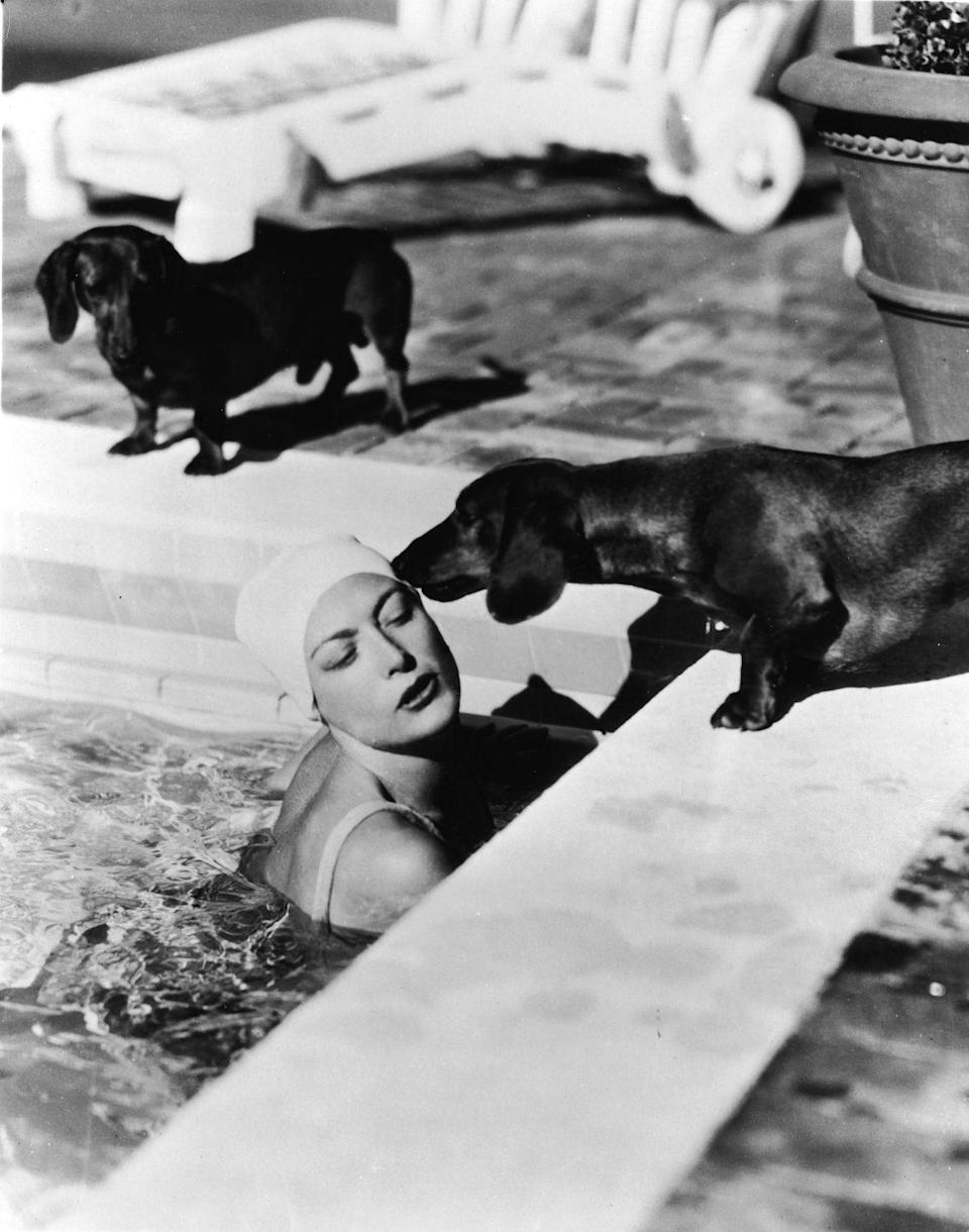 <p>Joan Crawford is greeted by her pet dachshunds after swimming laps in her Beverly Hills pool in 1938. </p>