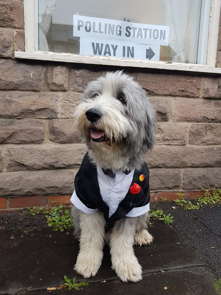 <p>This furry fella put on his glad rags for polling day (Twitter/thoughtorgan) </p>