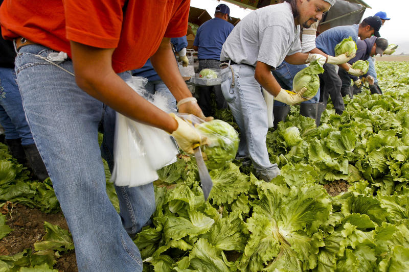 Workers harvest iceberg lettuce at a California farm for the Nunes Company, which handles more than 20,000 crop acres of various fresh vegetables annually. (Tony Avelar via Getty Images)