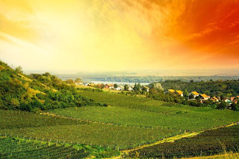 Cheers! Vineyards in the Zupa region of Serbia: Alamy Stock Photo