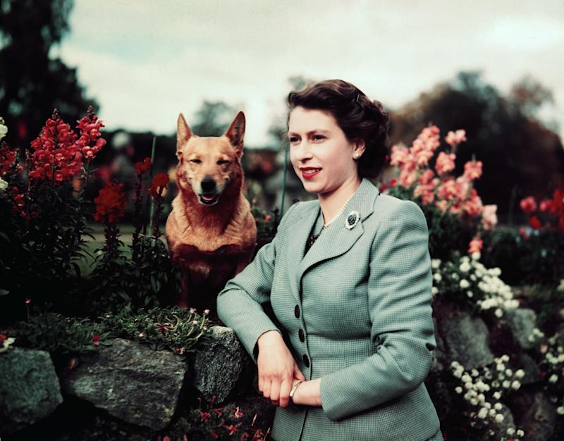 Queen Elizabeth at Balmoral Castle in Scotland with one of her corgis, 1952.
