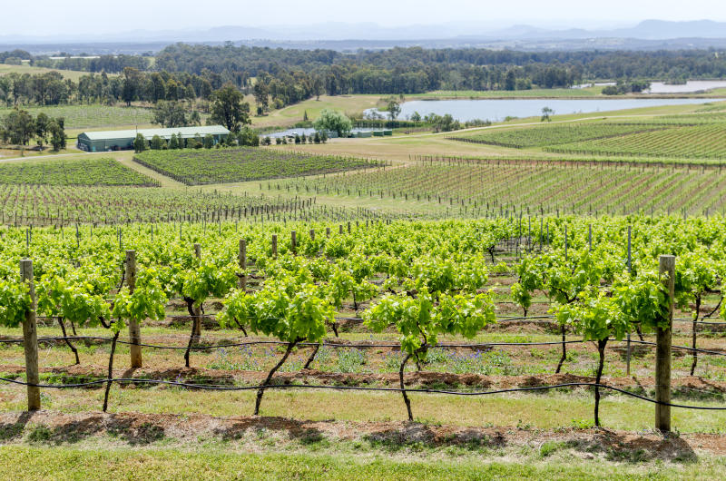 Hunter Valley Vineyard with view and lake in the background, New South Wales, Australia