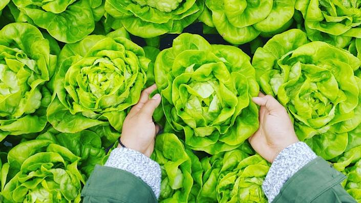 """<span class=""""caption"""">Fewer people than ever are involved in food production.</span> <span class=""""attribution""""><span class=""""source"""">PHÚC LONG/Unsplash</span>, <a class=""""link rapid-noclick-resp"""" href=""""http://artlibre.org/licence/lal/en"""" rel=""""nofollow noopener"""" target=""""_blank"""" data-ylk=""""slk:FAL"""">FAL</a></span>"""