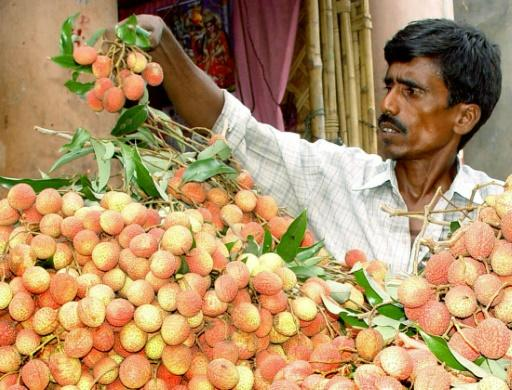 The outbreak of Acute Encephalitis Syndrome typically coincides with the lychee season