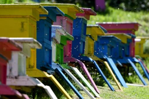 The bee farm is home to some 300 colourfully-painted hive boxes
