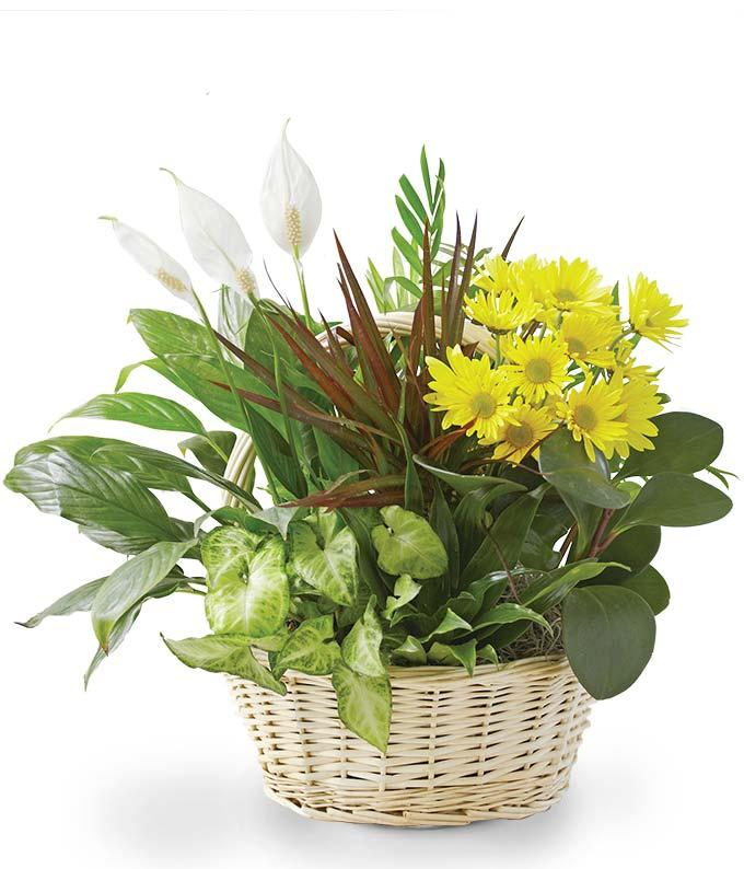 Flowering Dish Garden. Image via From You Flowers.