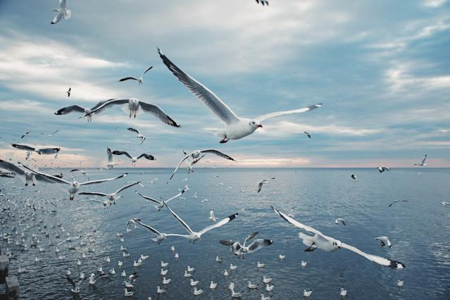 Scenic View of Seagulls above Sea Against Sky During Sunset, Samutprakan province, Thailand, Asia