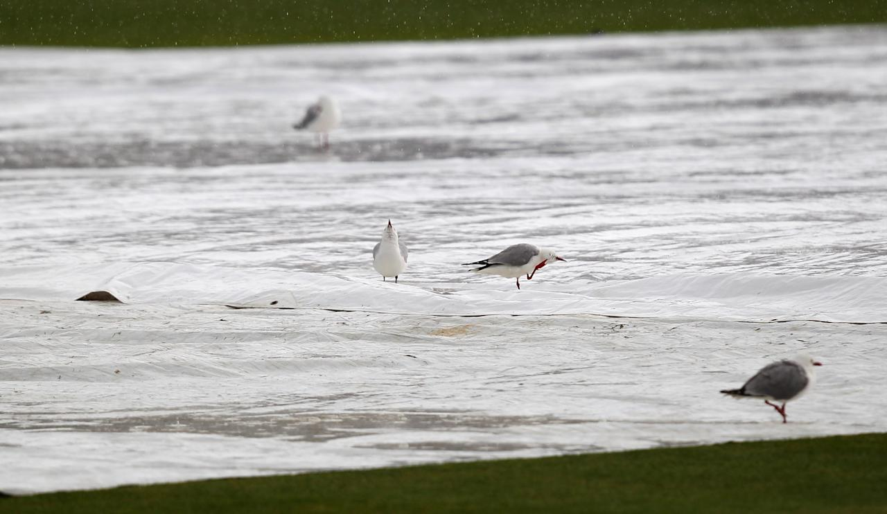 DUNEDIN, NEW ZEALAND - DECEMBER 07:  Seagulls bathe on the covers as rain falls during day five of the first test match between New Zealand and the West Indies at University Oval on December 7, 2013 in Dunedin, New Zealand.  (Photo by Rob Jefferies/Getty Images)