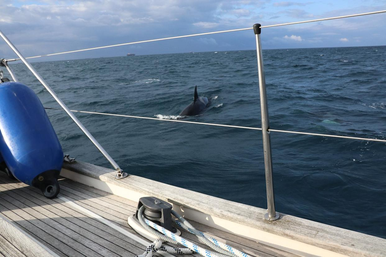 British yacht crew attacked by pod of 30 killer whales