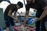 A young fisherman sorts crabs on deck before the haul was delivered to market, after a limited number of boats were allowed to return to the sea following a cease-fire reached after an 11-day war between Hamas and Israel, in Gaza City, Sunday, May 23, 2021. (AP Photo/John Minchillo)