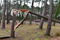 A car drives past a broken pine tree in the basin city of Andernos, near Bordeaux, south-western France, after Storm Fabien. (Reuters)