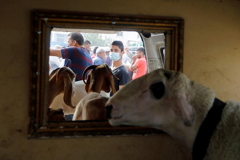A boy wears a mask as sheep and goats are seen in a truck at a livestock market ahead of the Muslim festival of sacrifice Eid al-Adha, amid the coronavirus disease (COVID-19) crisis in Nablus in the Israeli-occupied West Bank July 27, 2020. REUTERS/Raneen Sawafta TPX IMAGES OF THE DAY