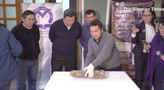 Researchers said the creature is thought to have died between 20,000 and 50,000 years ago. Photo: Siberian Times