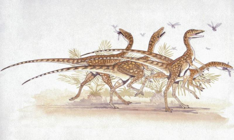Saltopuses chasing insects. Early dinosaurs looked like these small animals, but how did they branch out into the more familiar forms?