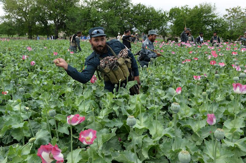 There's no way to ever win against the Taliban if the heroin trade is left to flourish.