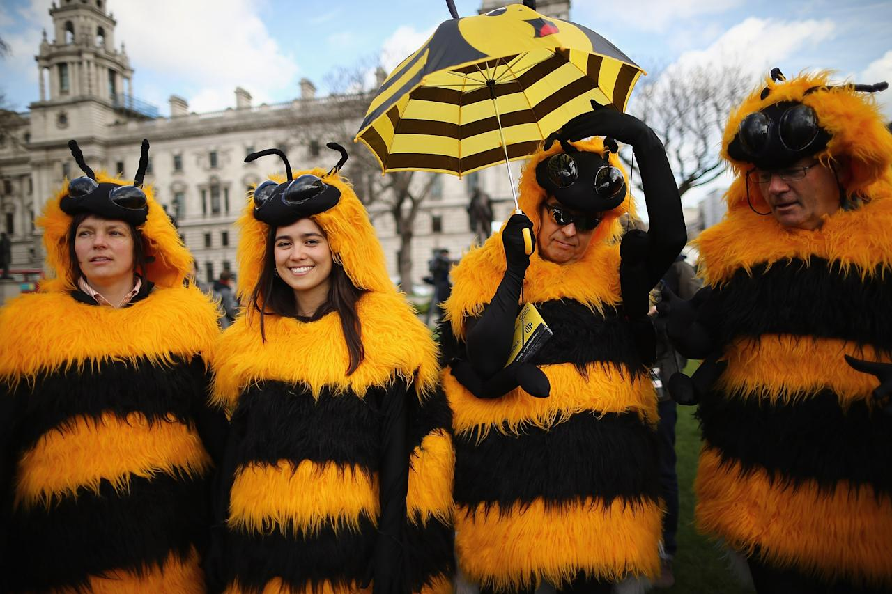 LONDON, ENGLAND - APRIL 26:  Campaigners dressed as bees gather on Parliament Square on April 26, 2013 in London, England. Over a hundred campaigners including British fashion designers Dame Vivienne Westwood and Katharine Hamnett gathered on Parliament Square, some dressed as beekeepers, to urge British Secretary of State for the Environment Food and Rural Affairs, Owen Paterson, to not block EU proposals to suspend the use of bee killing pesticides.  (Photo by Dan Kitwood/Getty Images)