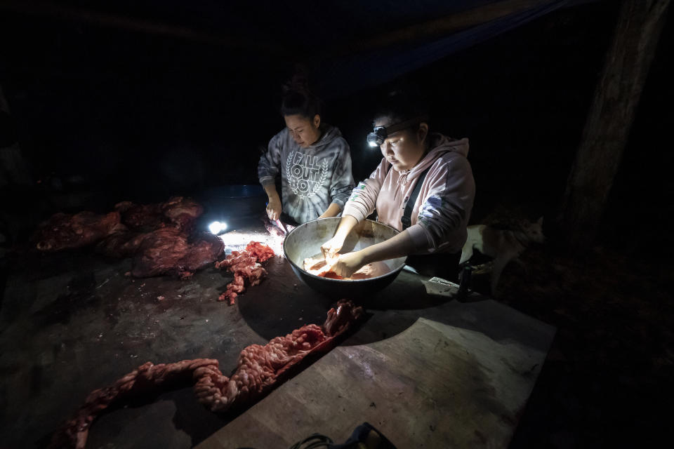 Giovanna Stevens, left, and Kori Williams clean moose intestines at Stevens' family hunting camp on Wednesday, Sept. 15, 2021, near Stevens Village, Alaska. For the first time in memory, both king and chum salmon have dwindled to almost nothing and the state has banned salmon fishing on the Yukon. The remote communities that dot the river and live off its bounty are desperate and doubling down on moose and caribou hunts in the waning days of fall.(AP Photo/Nathan Howard)