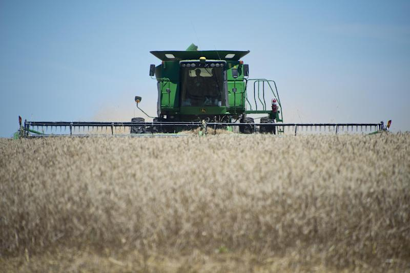 A combine harvester is used in a wheat field near the city of Mercedes, 270 km northwest of Montevideo, Uruguay, on December 4, 2014 (AFP Photo/Pablo Porciuncula)