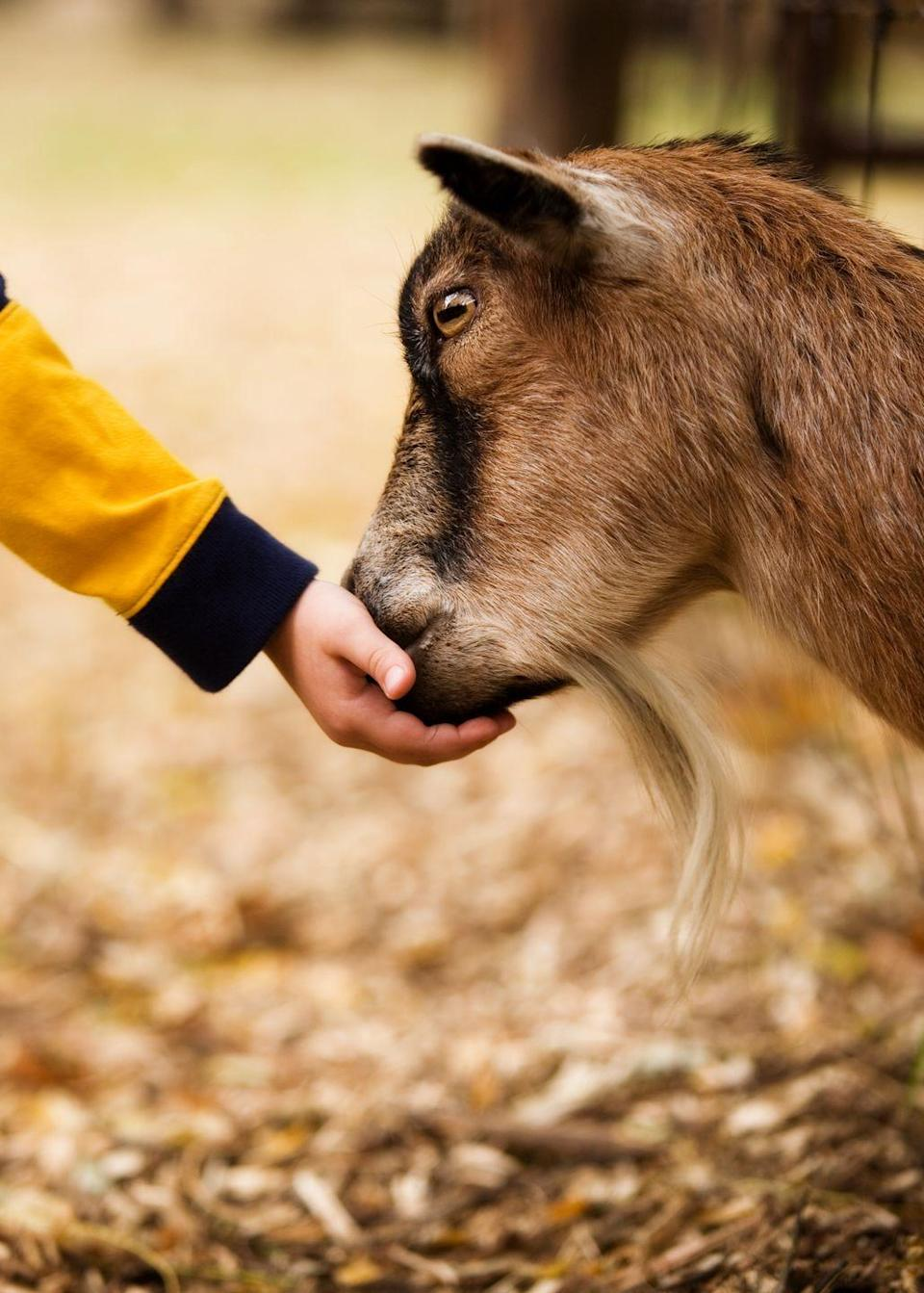 <p>Head to your local petting zoo and take part in an activity that kids (and grown-ups!) of all ages can enjoy.</p>