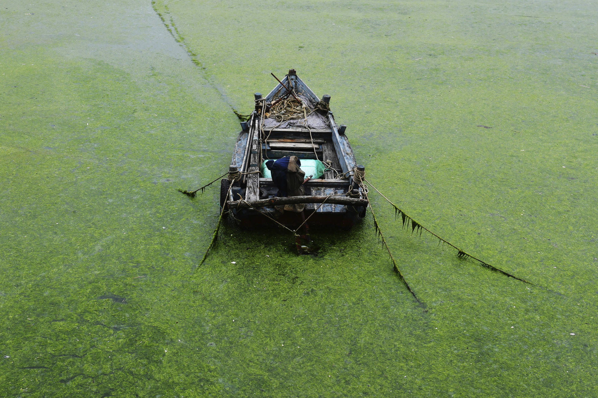 Chinese port city Qingdao launches fight against algae bloom