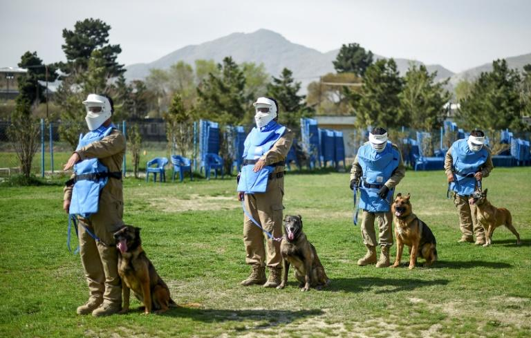 These dogs are being trained for a life-or-death mission: finding explosives in a country where hidden mines, bombs and weapons routinely kill (AFP Photo/WAKIL KOHSAR)