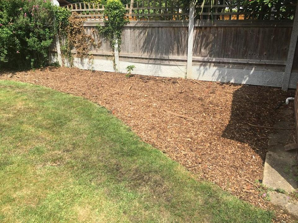 'There was a large border behind the shed that needed filling' (Tom Peck)