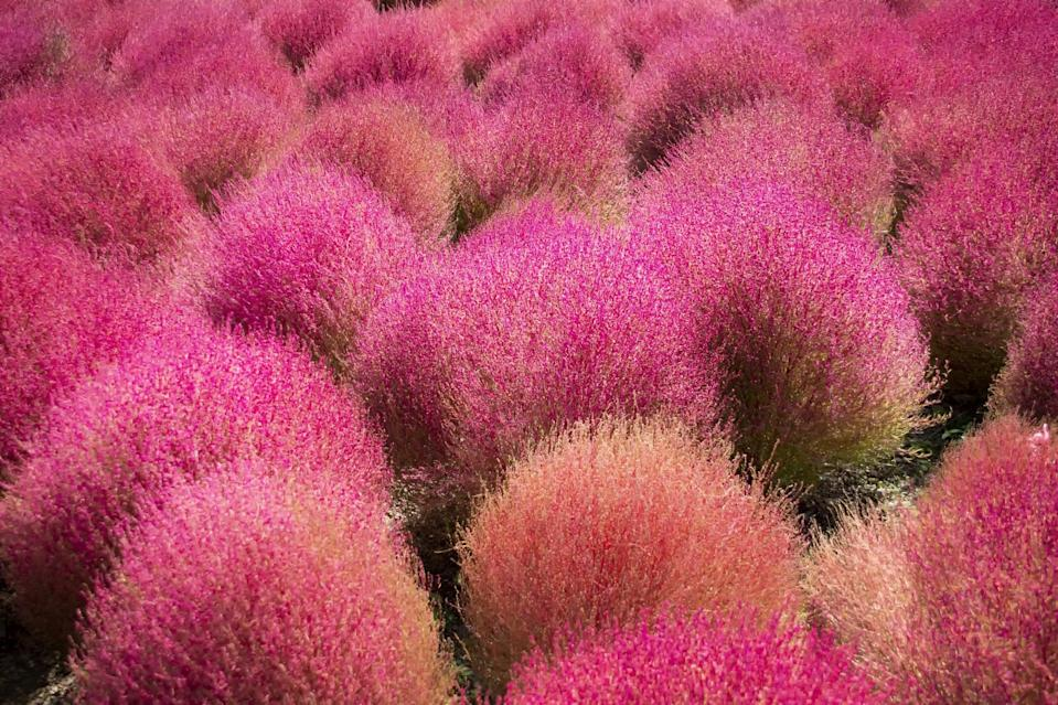 """<p>So many unique varieties of flowers and plants abound in the <span class=""""nofilter"""">Hitachi</span> Seaside Park.</p>"""